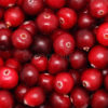 Processed fruit products for the food and drinks industry: Cranberries